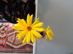 relatiecoaching nijmegen relatiepraktijk met bloem